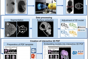 3D PDF as a tool for interactive and intuitive imaging
